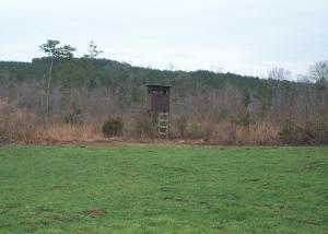 whitetail deer hunting Alabama